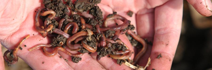 I Heart Worms Queens Botanical Garden