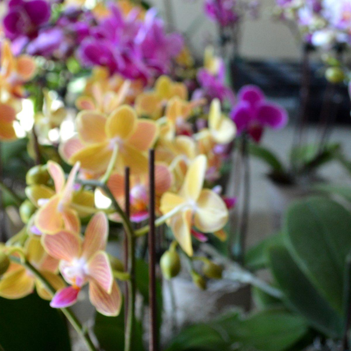 Seasonal Highlights Queens Botanical Garden