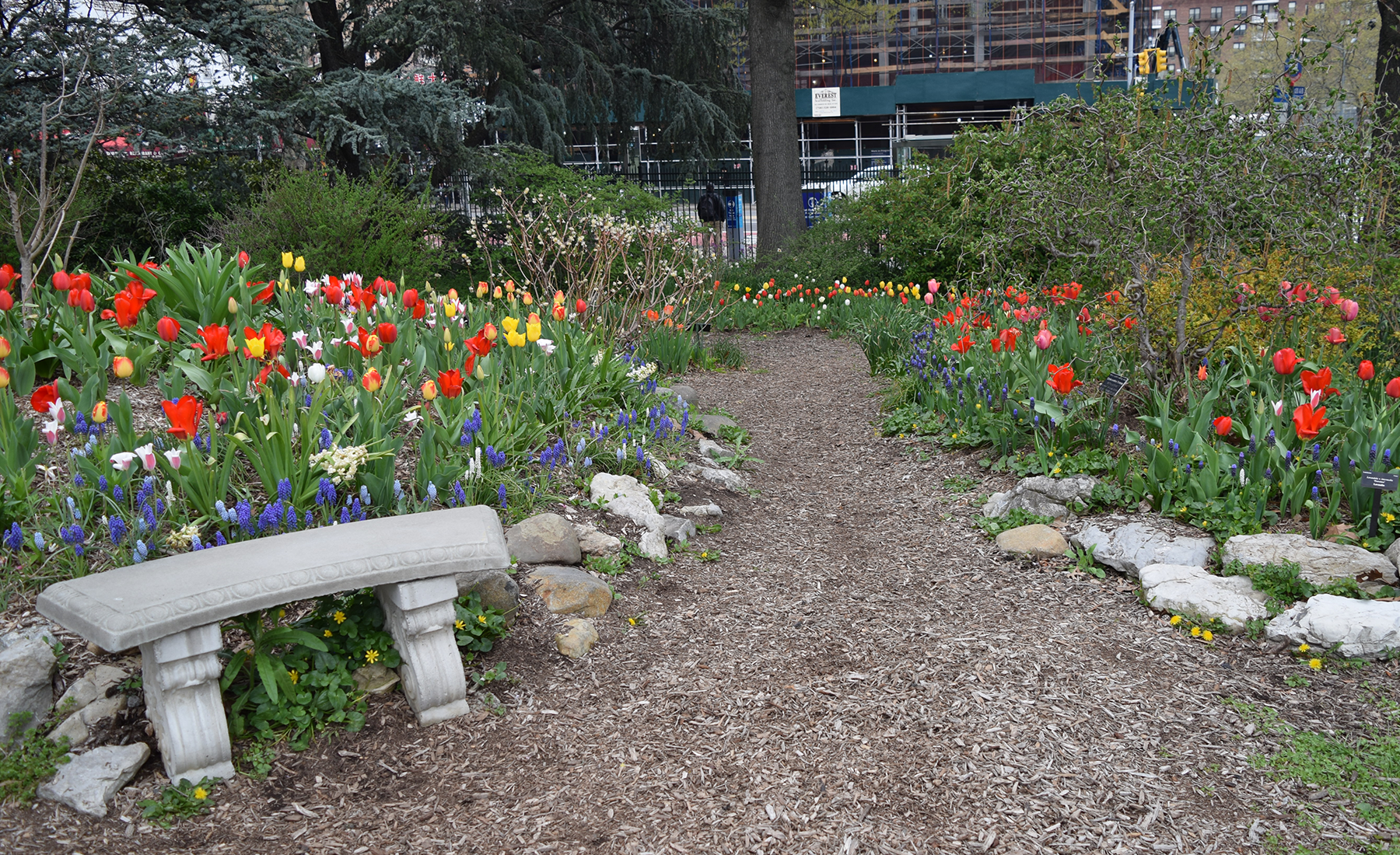 Tulip Time Queens Botanical Garden