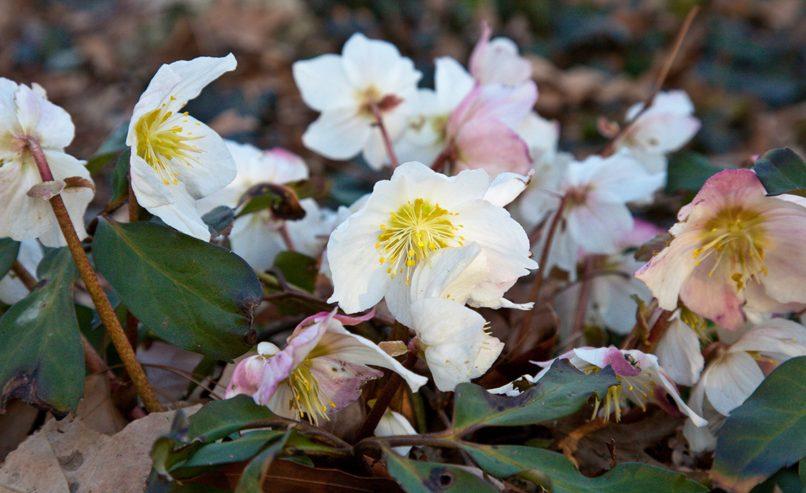Seasonality 3 March Queens Botanical Garden