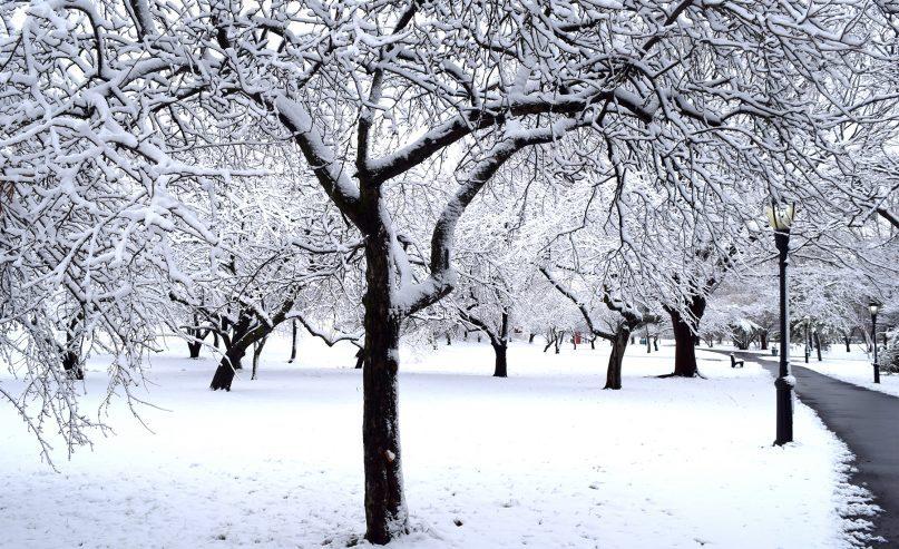 Seasonality 1 January Queens Botanical Garden