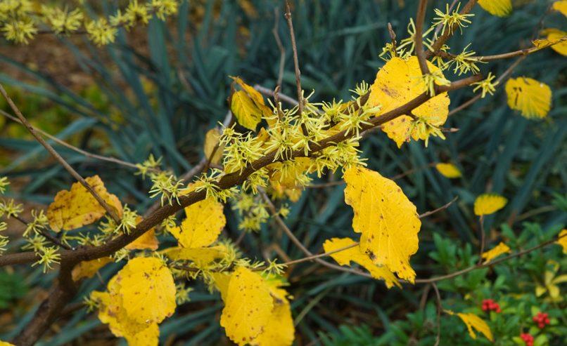 Seasonality 11-November - Queens Botanical Garden