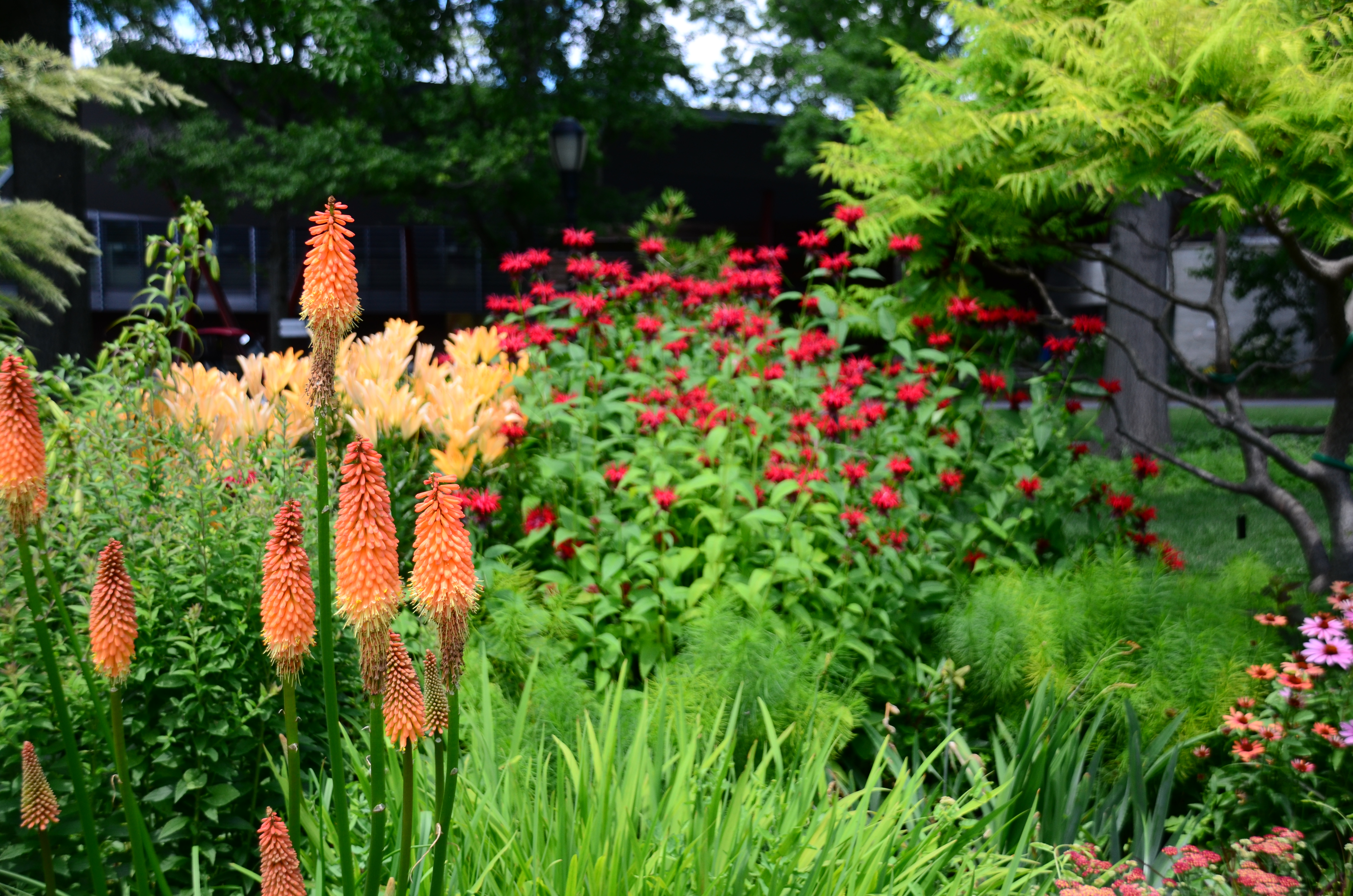 2017 7 5 Credit Jess Brey27 Queens Botanical Garden