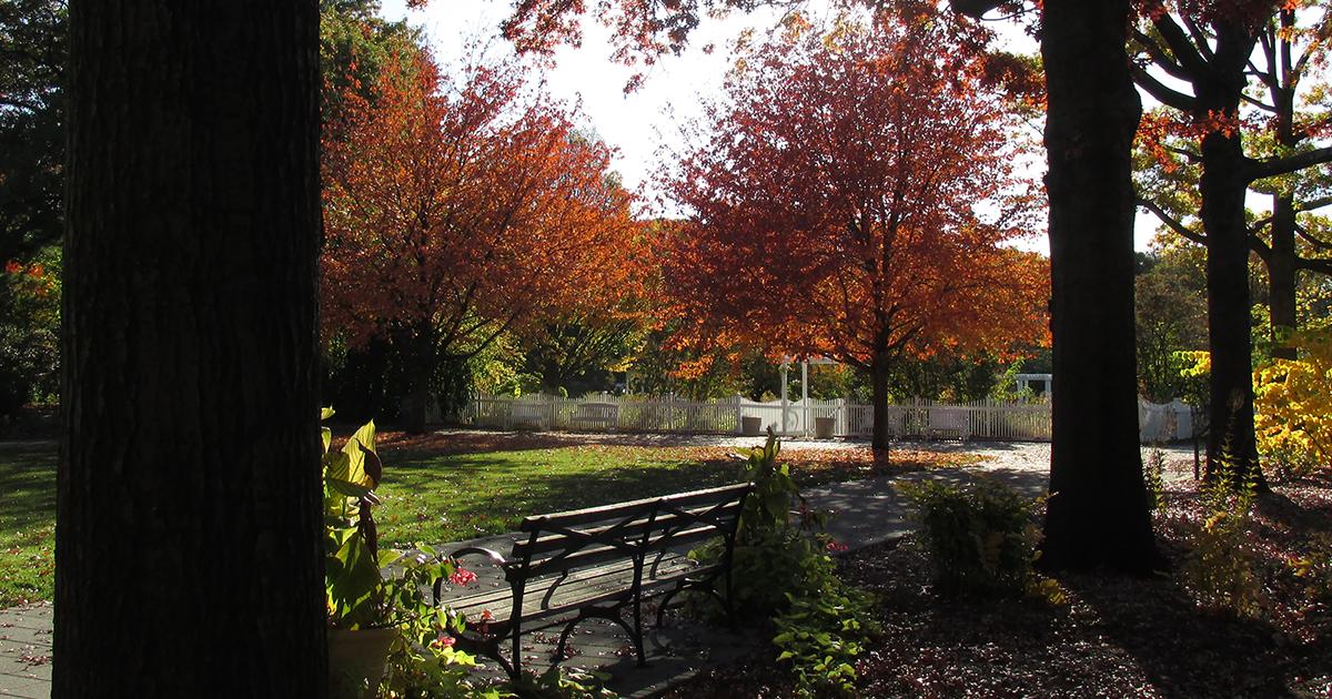Watercolor Workshop Autumn Color Queens Botanical Garden