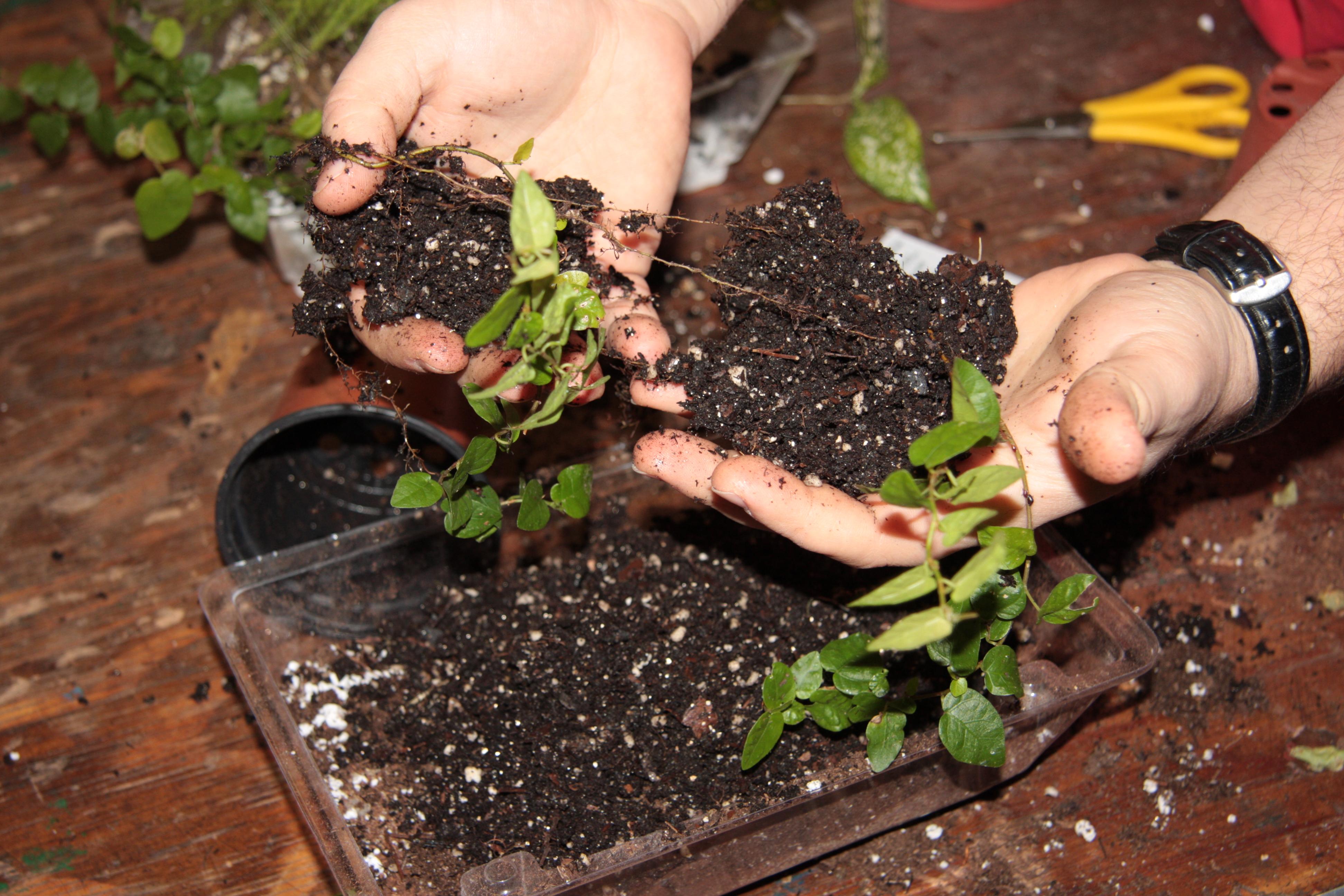 Winter Family Programs Tabletop Gardening Queens Botanical